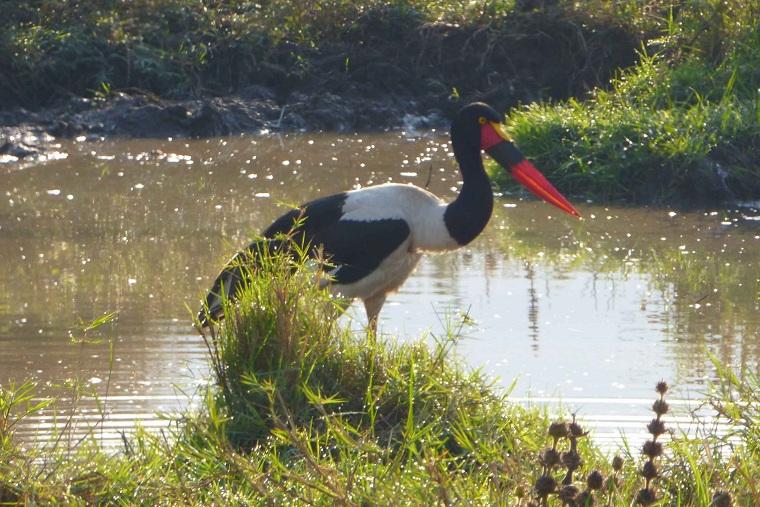 Qué ver en Akagera National Park en Ruanda