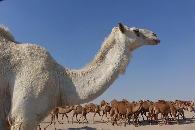 Viaje a Kuwait, Baréin y Estambul por libre