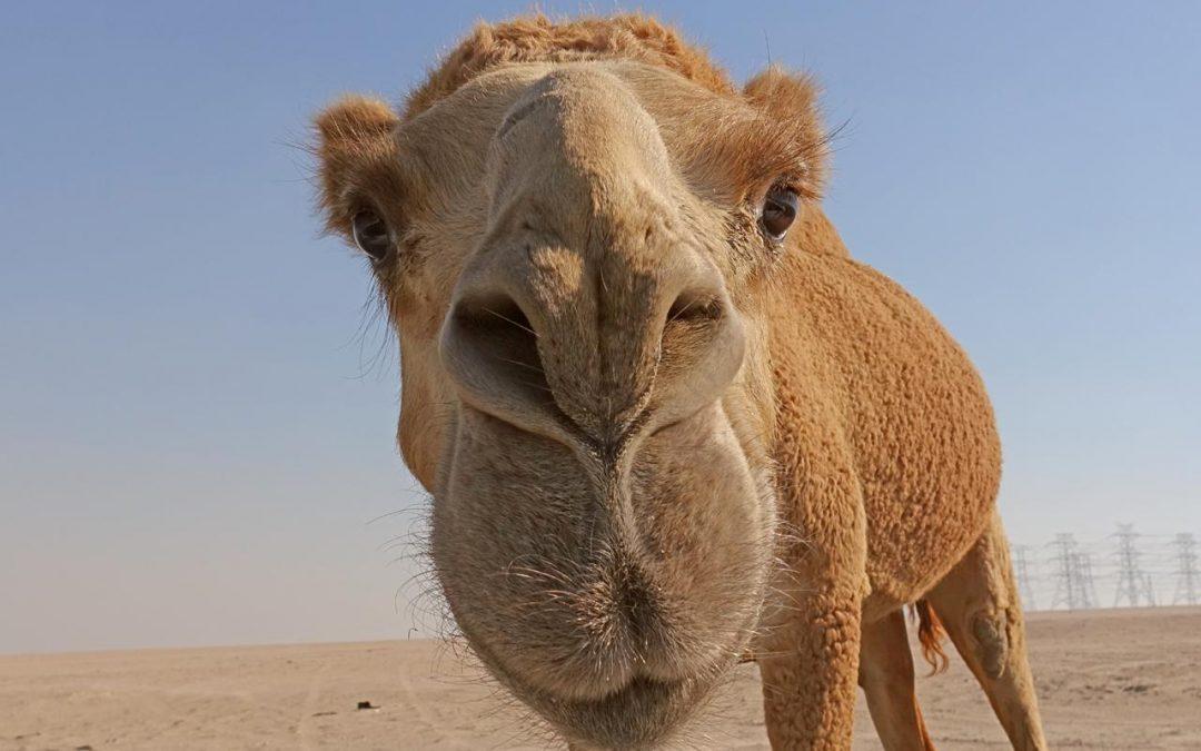 Tour por el desierto en Kuwait