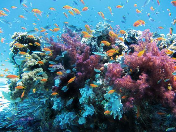 Cairns y la Gran Barrera de Coral en Australia