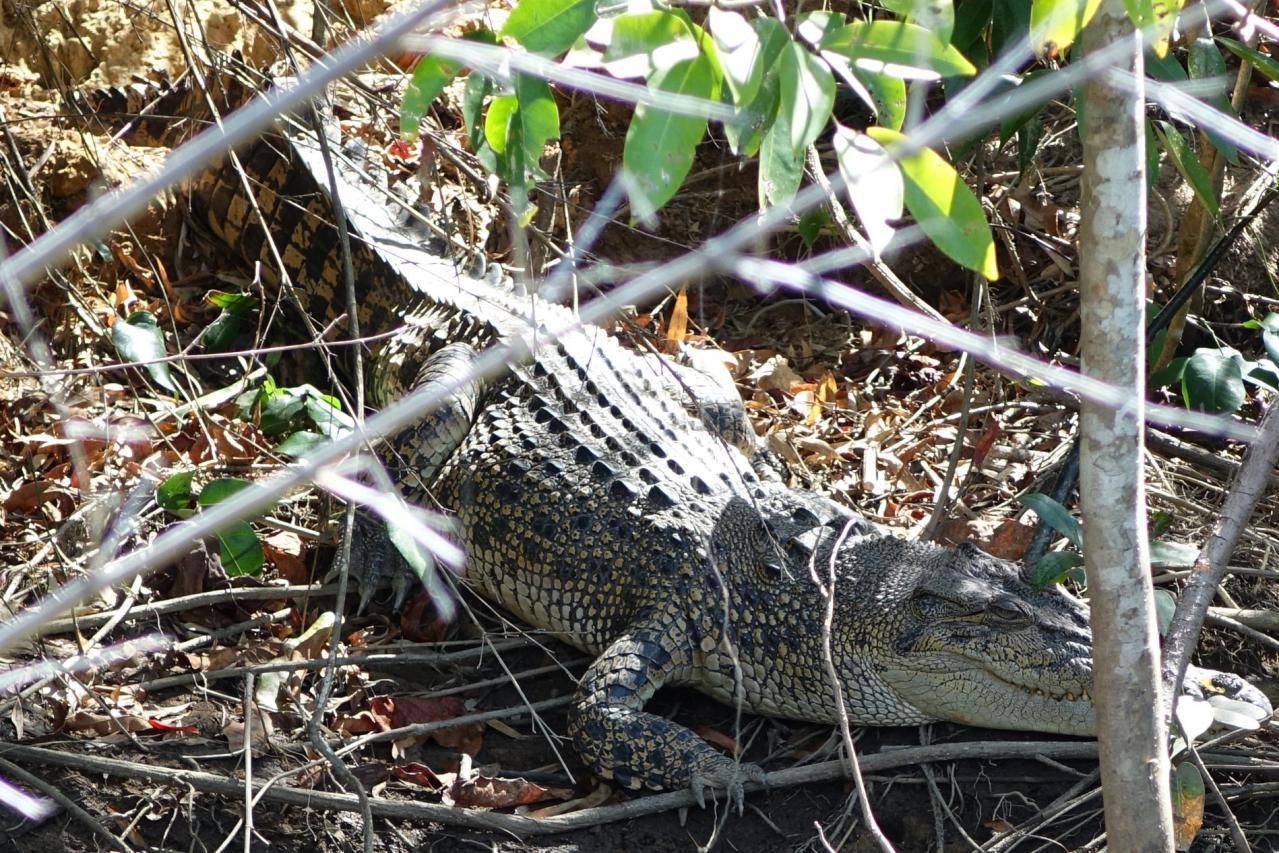 De Cairns a Cape Tribulation y rutas por Daintree Forest