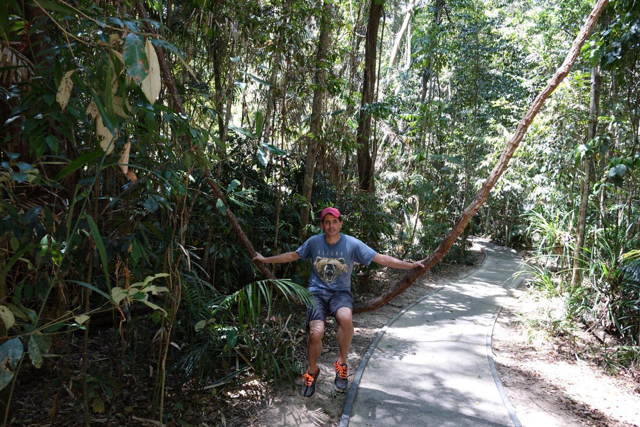 De Cairns a Cape Tribulation. Rutas en Daintree Forest