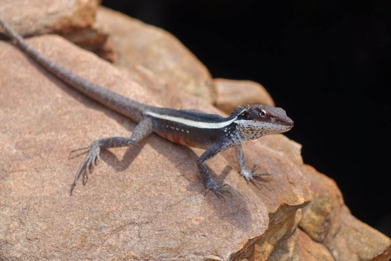 Kings Canyon en Watarrka National Park (Australia)