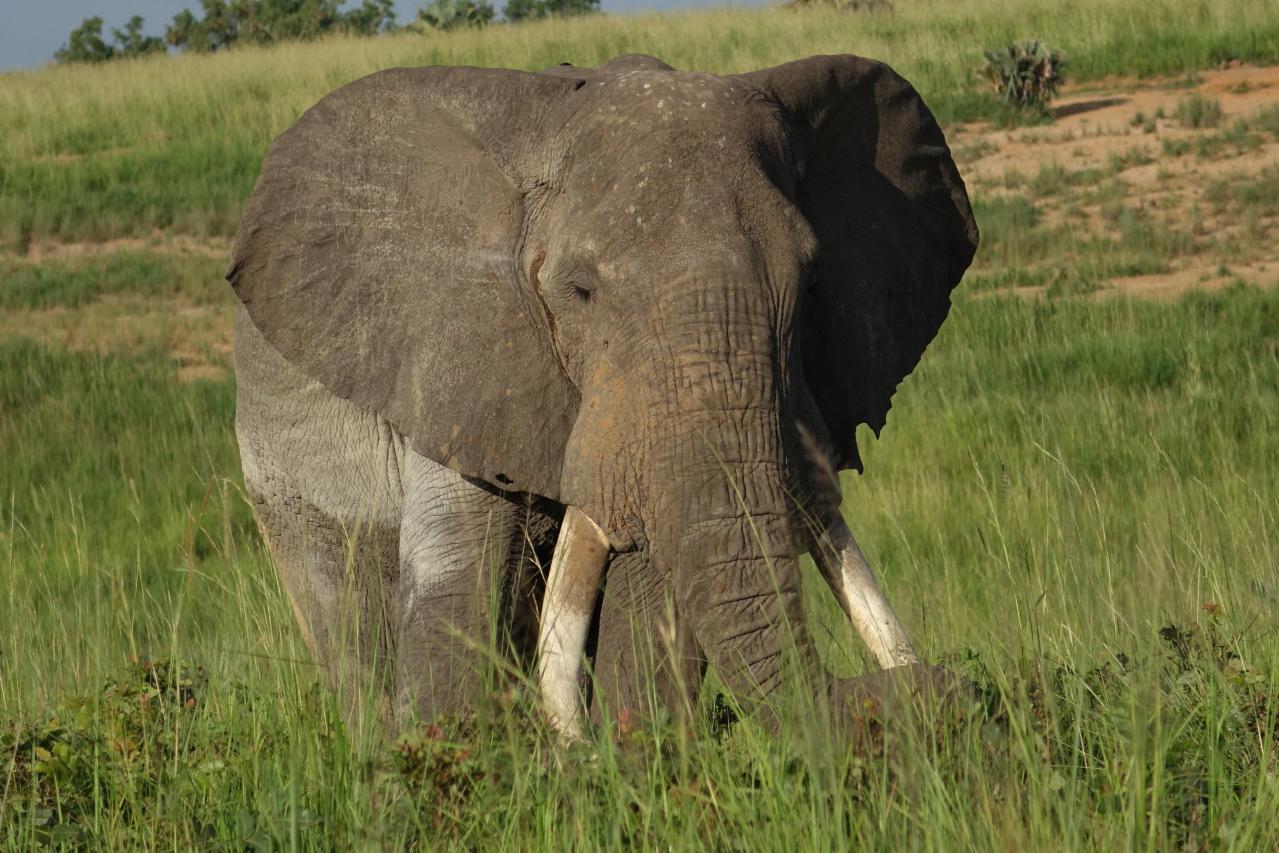 Que ver y hacer en Murchison Falls en Uganda